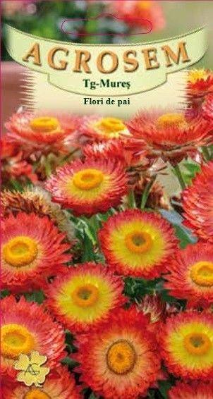 Seminte de Flori de paie portocalii - AS - Helichrysum bracteatum