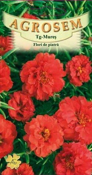 Seminte de Flori de piatra duble rosii - AS - Portulaca grandiflora