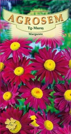 Seminte de Margarete rosii - AS - Chrysanthemum coccineum