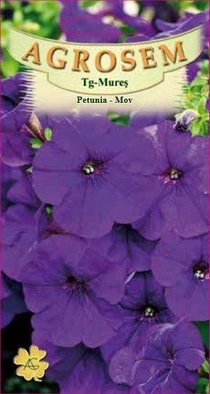 Seminte de Petunia mov seminte - AS - Petunia x hybrida compacta nana