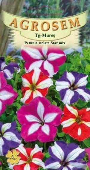 Seminte de Petunia stelata nana Star mix - AS - Petunia x hybrida compacta nana