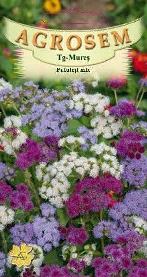 Seminte de Pufuleti Dwarf mix - AS - Ageratum mexicanum
