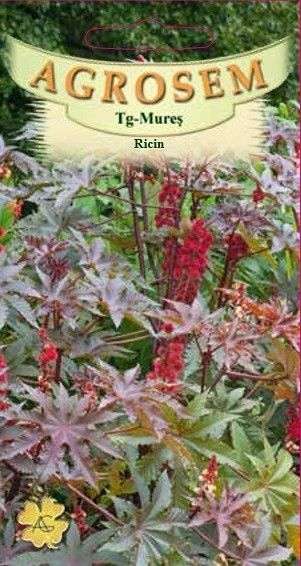Seminte de Ricin - AS - Ricinus communis Gibsonii