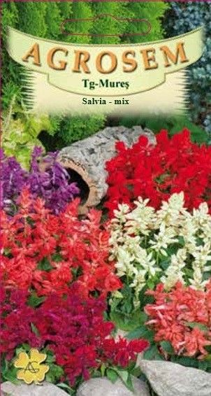Seminte de Salvia mix - AS - Salvia splendens