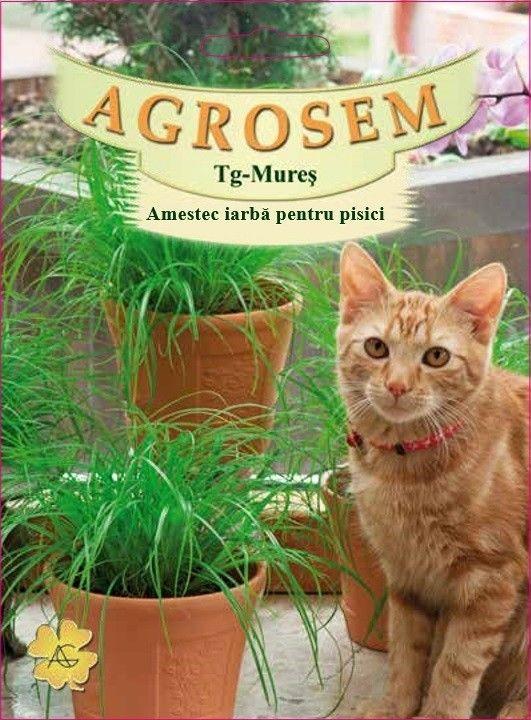 Seminte de Amestec iarba pentru pisici 50g - AS