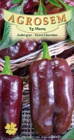 Seminte de Ardei gras Sweet Chocolate - AS - Capsicum annuum