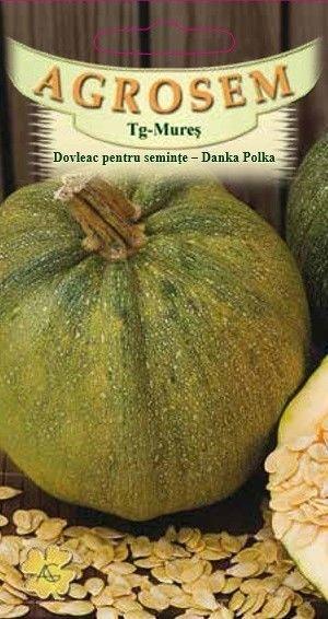 Seminte de Dovleac pentru seminte Danka Polka - AS - Cucurbita pepo
