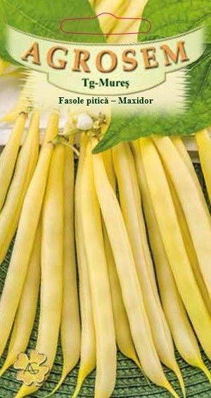 Seminte de Fasole pitica galbena Maxidor  - AS - Phaseolus vulgaris