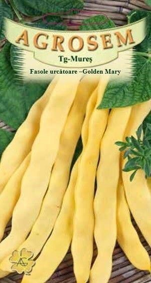 Seminte de Fasole urcatoare galbena Golden Mary  - AS - Phaseolus vulgaris
