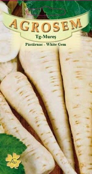 Seminte de Pastarnac White Gem  - AS - Pastinaca sativa