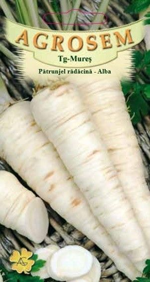 Seminte de Patrunjel radacina Alba - AS - Petroselinum crispum conv. radicosum