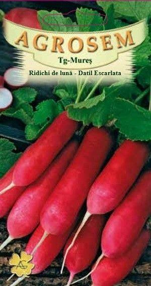 Seminte de Ridichi de luna Datil Escarlata - AS - Raphanus sativus var sativus