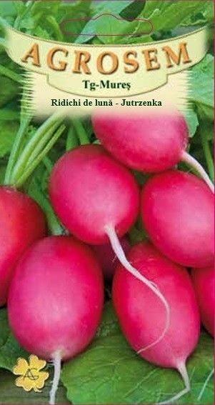 Seminte de Ridichi de luna Jutrzenka - AS - Raphanus sativus var sativus