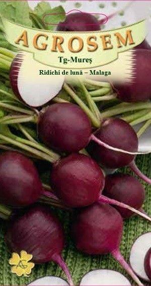 Seminte de Ridichi de luna violet Malaga - AS - Raphanus sativus var sativus