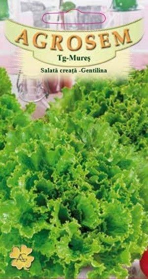 Seminte de Salata creata Gentilina - AS - Lactuca sativa