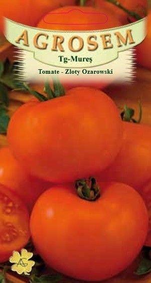 Seminte de Tomate portocalii Zloty Ozarowski - AS - Lycopersicon esculentum