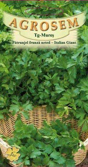 Seminte de Patrunjel frunza neted Italian Giant - AS - Petroselinum crispum var vulgare