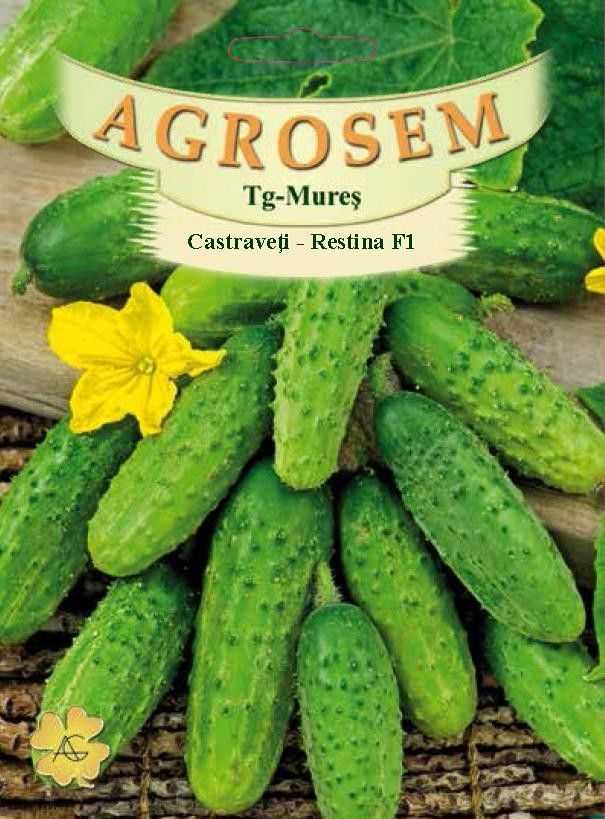 Seminte de Castraveti Restina F1- AS - Cucumis sativus