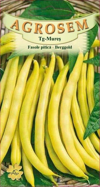 Seminte de Fasole pitica Berggold - 200g - AS - Phaseolus vulgaris var. nanus