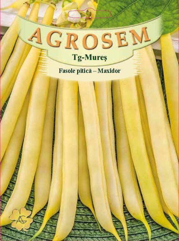 Seminte de Fasole pitica galbena Maxidor - 1 kg - AS - Phaseolus vulgaris var. nanus