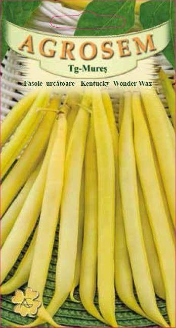 Seminte de Fasole urcatoare Kentucky Wonder Wax 1 kg - AS - Phaseolus vulgaris