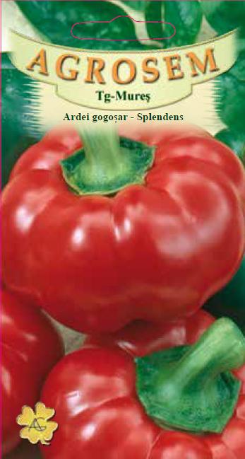 Seminte de Ardei gogosari Splendens - AS - Capsicum annuum