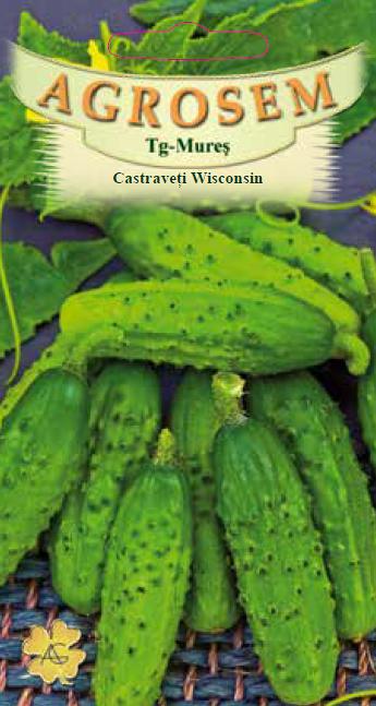 Seminte de Castraveti cornichon Wisconsin - AS - Cucumis sativus