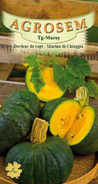 Seminte de Dovleac de copt Marina di Chioggia - AS - Cucurbita maxima