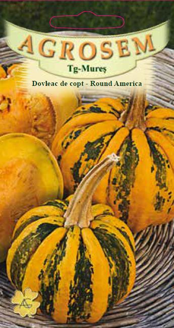 Seminte de Dovleac de copt Round America - AS - Cucurbita maxima
