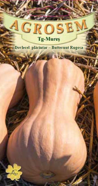 Seminte de Dovlecel placintar Butternut Rugosa - AS - Cucurbita moschata
