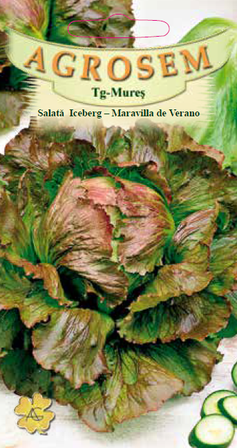 Seminte de Salata Iceberg - Maravilla de Verano - AS - Lactuca sativa