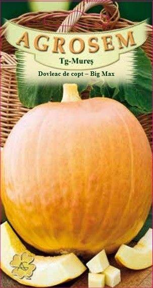 Seminte de Dovleac de copt Big Max - BigPack - AS - Cucurbita maxima