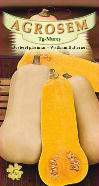 Seminte de Dovlecel placintar Waltham Butternut - BigPack - AS - Cucurbita moschata
