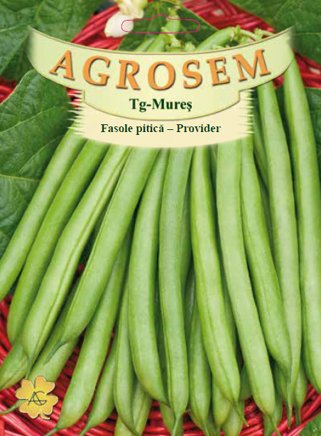 Seminte de Fasole pitica Provider - 50 g - AS - Phaseolus vulgaris var. nanus