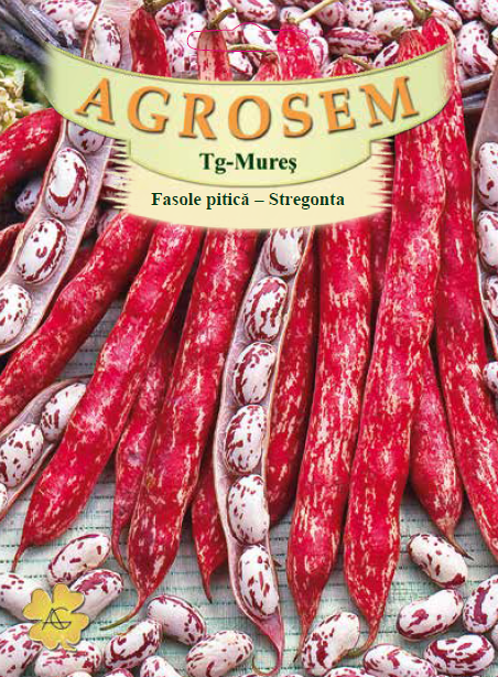 Seminte de Fasole boabe Stregonta - 100 g - AS - Phaseolus vulgaris var. nanus