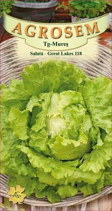 Seminte de Salata Great Lakes 118 - BigPack - AS - Lactuca sativa