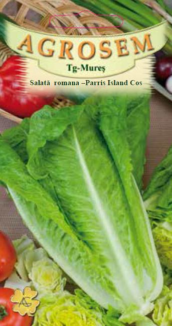Seminte de Salata romana - Paris Island Cos - BigPack - AS - Lactuca sativa
