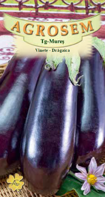 Seminte de Vinete Dragaica - BigPack - AS - Solanum melongena