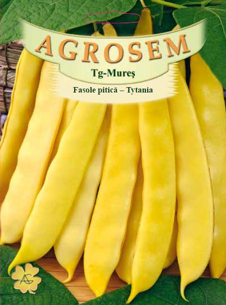 Seminte de Fasole pitica Tytania - 1 kg - AS - Phaseolus vulgaris var. nanus