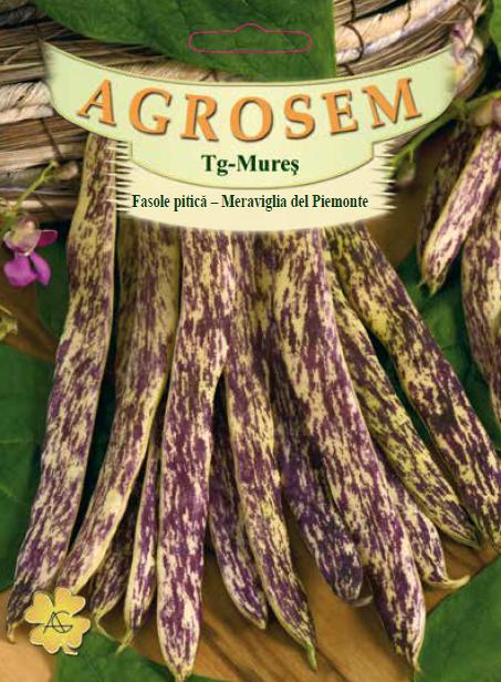 Seminte de Fasole pitica Meraviglia del Piemonte - 200g - AS - Phaseolus vulgaris var. nanus