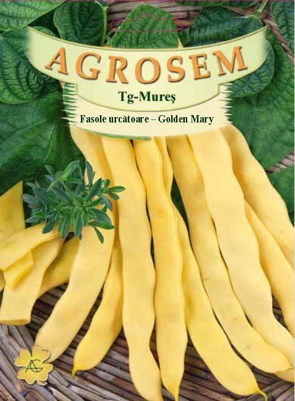 Seminte de Fasole urcatoare galbena Golden Mary - 200g - AS - Phaseolus vulgaris