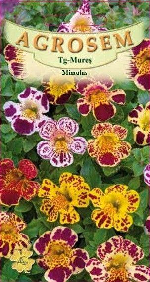 Seminte de Mimulus mix - AS - Mimulus luteus