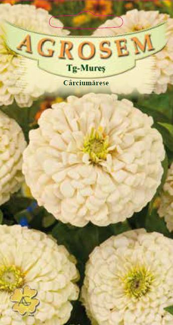 Seminte de Carciumarese mari albe - AS - Zinnia elegans