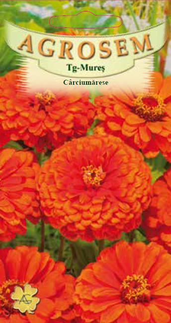 Seminte de Carciumarese mari portocalii - AS - Zinnia elegans