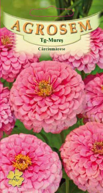 Seminte de Carciumarese mari roz - AS - Zinnia elegans