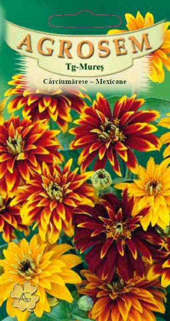 Seminte de Carciumarese Mexicane - AS - Zinnia haageana