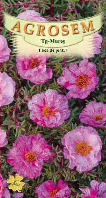 Seminte de Flori de piatra duble Rose - AS - Portulaca grandiflora