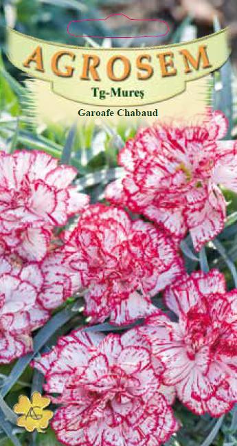 Seminte de Garoafe Chabaud Bicolore - AS - Dianthus caryophyllus