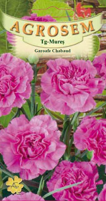 Seminte de Garoafe Chabaud Pink - AS - Dianthus caryophyllus