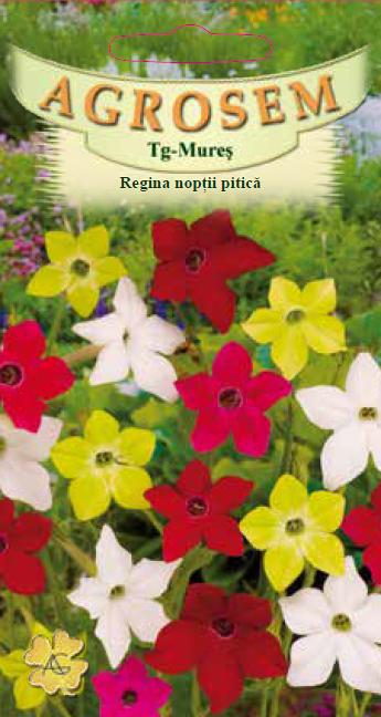 Seminte de Regina noptii pitica mix - AS - Nicotiana alata